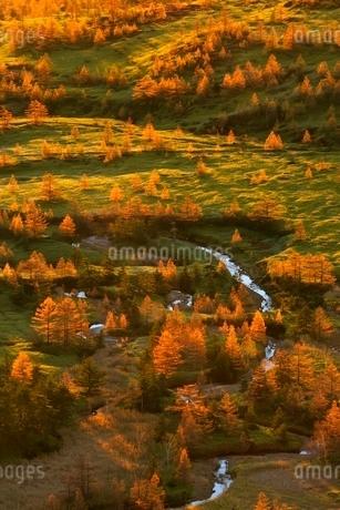 渋峠より望む朝日さす紅葉の芳ケ平の写真素材 [FYI02095663]