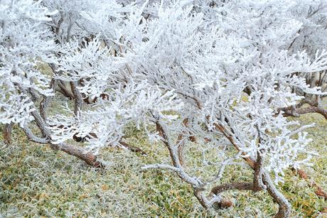 霧氷の写真素材 [FYI02095673]