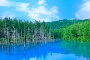 美瑛 青い池の写真素材 [FYI02095718]