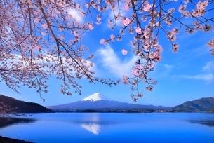 河口湖の桜と逆さ富士の写真素材 [FYI02095768]