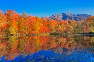 紅葉の刈込池と白山三ノ峰の写真素材 [FYI02095772]