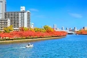 大川沿いの紅葉とビル群の写真素材 [FYI02095857]