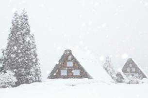 雪降る白川郷合掌造り集落の写真素材 [FYI02095859]