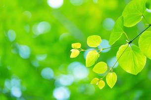 新緑の葉アップとボケの写真素材 [FYI02095877]