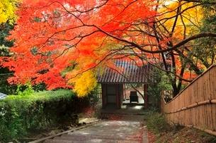 京都・洛西 紅葉の金蔵寺の写真素材 [FYI02095965]