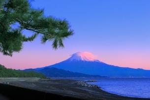 三保の松原から朝焼けの富士山を望むの写真素材 [FYI02096007]