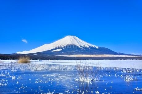 富士山と氷結の山中湖に霧氷の写真素材 [FYI02096081]