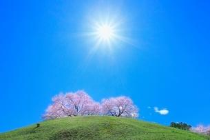 さきたま古墳公園のサクラと太陽の写真素材 [FYI02096131]