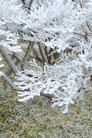 霧氷の写真素材 [FYI02096151]