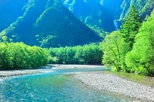 新緑の上高地,梓川と唐松林の写真素材 [FYI02096205]