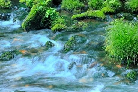 元滝伏流水の清流の写真素材 [FYI02096208]