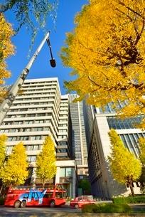 日比谷通り 紅葉のイチョウ並木と丸の内ビル群の写真素材 [FYI02096245]