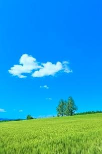 美瑛 麦畑の丘と樹林に雲の写真素材 [FYI02096298]