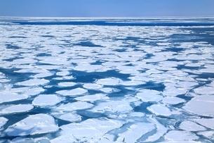 おーろら号よりオホーツク海網走沖の蓮葉氷流氷帯の写真素材 [FYI02096308]