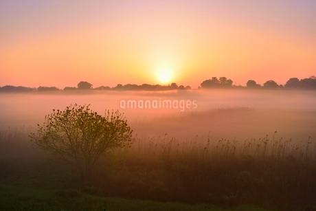 荒川河川敷の霧と朝日の写真素材 [FYI02096320]