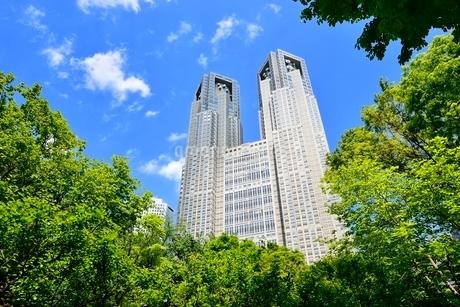 新緑の街路樹と都庁に新宿副都心高層ビルの写真素材 [FYI02096353]