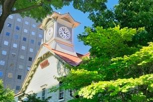 札幌,新緑の時計台の写真素材 [FYI02096423]