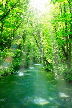 新緑の奥入瀬渓流に光芒の写真素材 [FYI02096424]