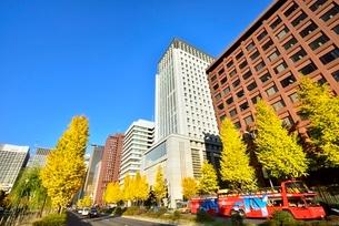 日比谷通り 紅葉のイチョウ並木と丸の内ビル群の写真素材 [FYI02096428]