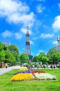 札幌,新緑の大通公園とさっぽろテレビ塔の写真素材 [FYI02096458]