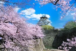 大阪城天守閣と桜の写真素材 [FYI02096469]