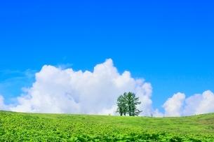 富良野 嵐の木と入道雲の写真素材 [FYI02096476]