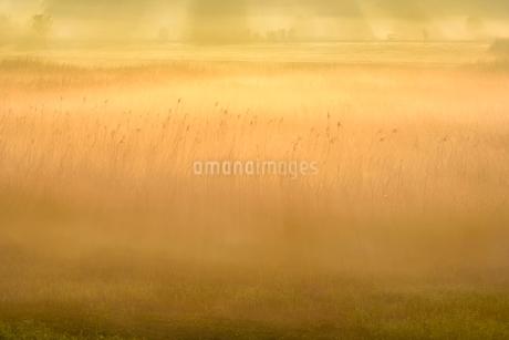 荒川河川敷の霧景色の写真素材 [FYI02096518]