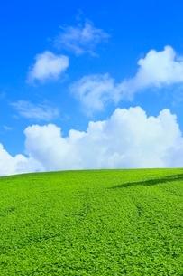 美瑛 緑の丘と入道雲の写真素材 [FYI02096570]
