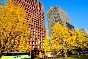 日比谷通り 紅葉のイチョウ並木と丸の内ビル群の写真素材 [FYI02096630]