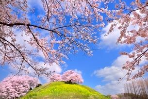 丘に桜の写真素材 [FYI02096634]