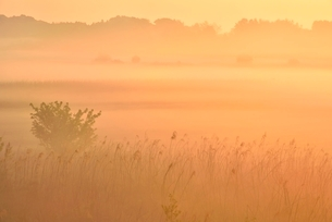 荒川河川敷の霧景色の写真素材 [FYI02096671]