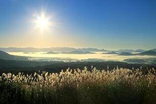 蒜山高原の雲海と朝日にススキの写真素材 [FYI02096788]