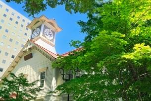 札幌,新緑の時計台の写真素材 [FYI02096789]
