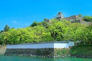 新緑の丸亀城の写真素材 [FYI02096811]