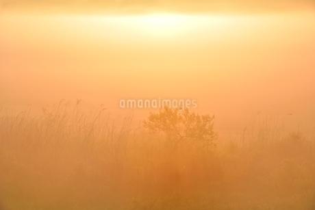 荒川河川敷の霧景色の写真素材 [FYI02096816]