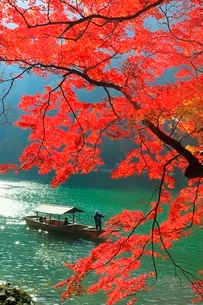 紅葉の嵐山 保津川の屋形船の写真素材 [FYI02096819]