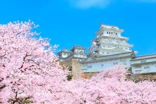 サクラと姫路城の写真素材 [FYI02096853]