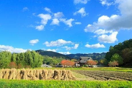 奈良・明日香の秋,橘寺と田園,の写真素材 [FYI02096856]