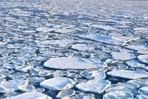 おーろら号よりオホーツク海の蓮葉氷流氷帯の写真素材 [FYI02096880]