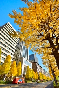 日比谷通り 紅葉のイチョウ並木と丸の内ビル群の写真素材 [FYI02096934]