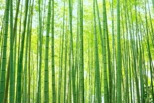 竹林の写真素材 [FYI02096952]