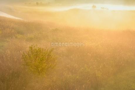 荒川河川敷の霧景色の写真素材 [FYI02097007]