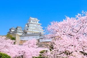 サクラと姫路城の写真素材 [FYI02097011]