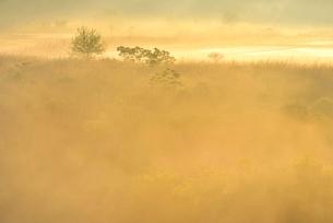 荒川河川敷の霧景色の写真素材 [FYI02097019]