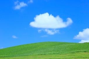 美瑛 緑の牧草の丘と雲の写真素材 [FYI02097068]