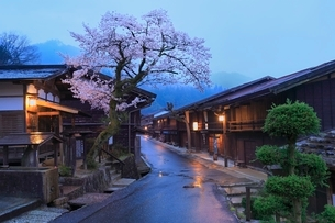 木曽路 妻籠宿とサクラの夕景の写真素材 [FYI02097100]