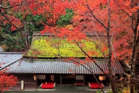 嵯峨野・鮎茶屋 平野屋と紅葉の写真素材 [FYI02097190]