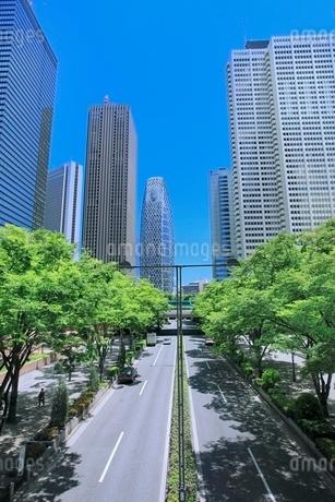 新宿副都心のビル街と新緑の写真素材 [FYI02097238]