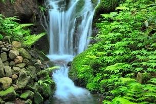 胴腹滝清水の清流の写真素材 [FYI02097341]
