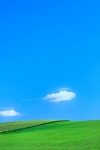 美瑛 緑の牧草とトウモロコシ畑に雲の写真素材 [FYI02097451]